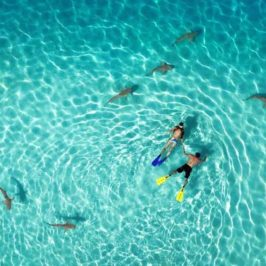 Drone Aerial Photography Contest 2015