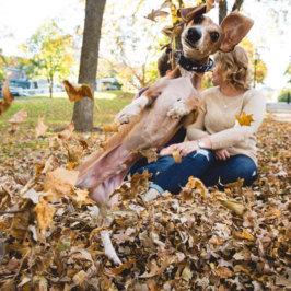 Jealous Dog Totally Photobombs Couple's Engagement Photos