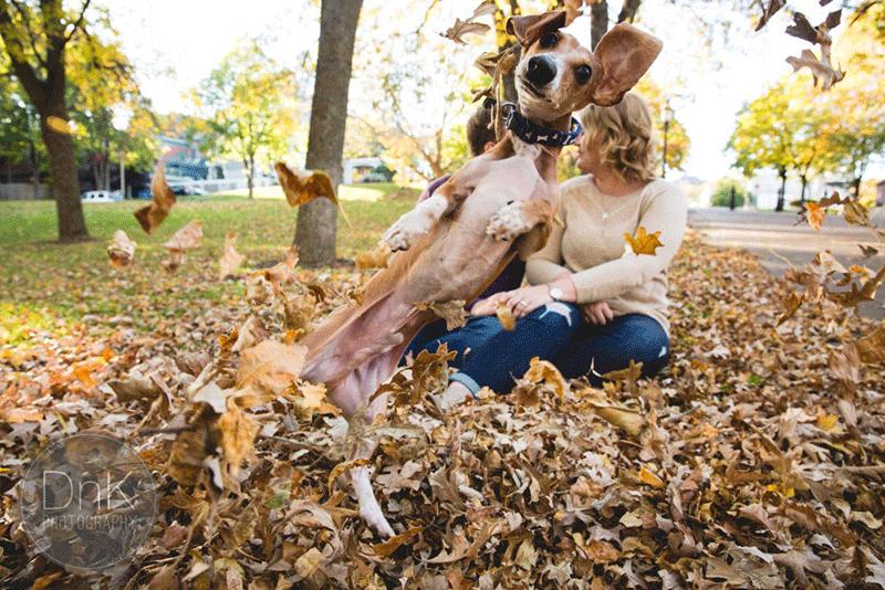 Jealous Dog Totally Photobombs Couple's Engagement Photos