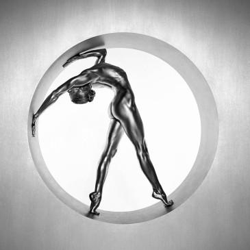 Silvereye by Guido Argentini