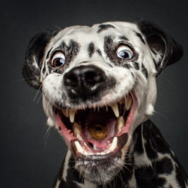 Hilarious Dog Portraits by Christian Vieler