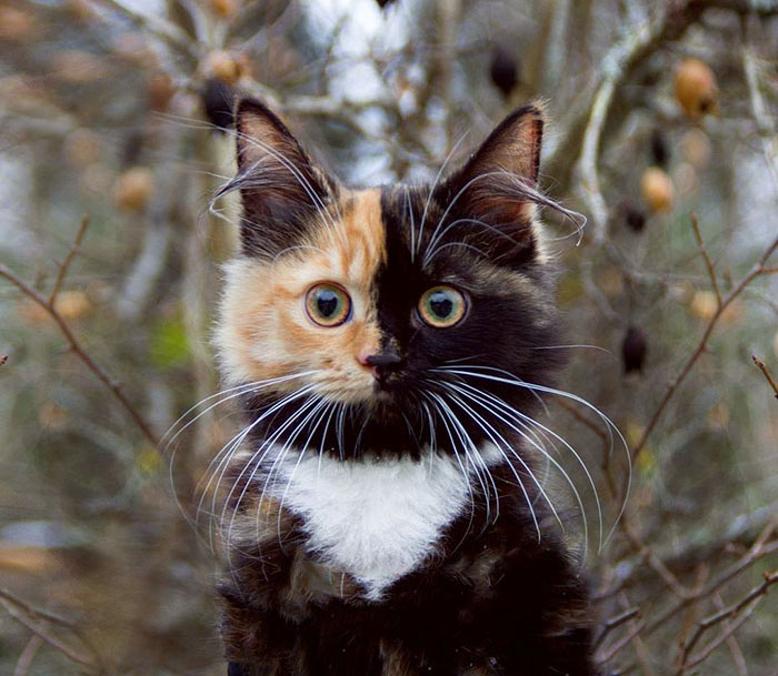 Yana, Two-Faced Cat
